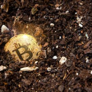 bitcoin floor