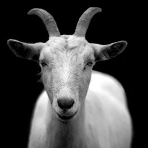 BitGo, a Goat for the Chivo wallet